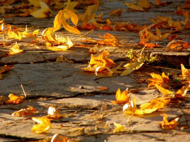 bunter Herbst 2014 © Facettenauge