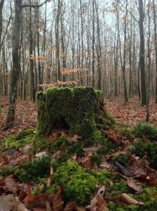 den Wald vor lauter Bäumen ... by Dorothea Schönfeld