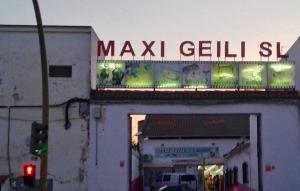 Maxi Geili SL © D.S.Felix 2016